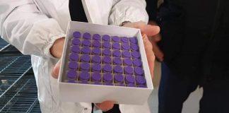Vaccino anti-Covid Pfizer
