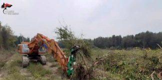 Piante abbattute in area protetta