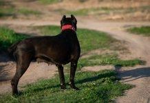 Cane (foto repertorio Shutterstock.com)
