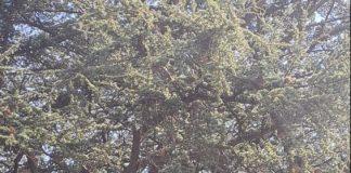 Tree climbers a parco Massari