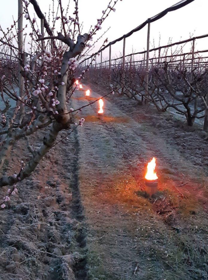 Gelate nei campi coltivati (foto Coldiretti)