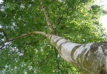 albero (foto di repertorio)