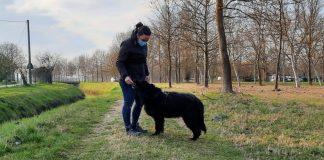 cane adozione Copparo