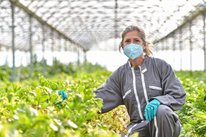 Imprese agricole gestite da donne (foto archivio Shutterstock)